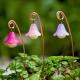 Fairy Garden Glow Lamps