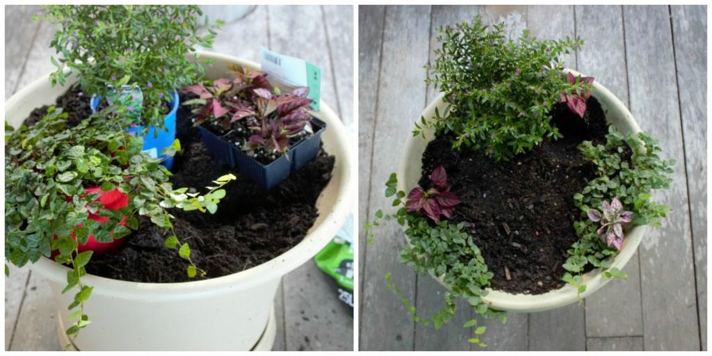 Plant your plants