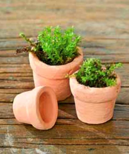 Mini Garden Decor & Tools