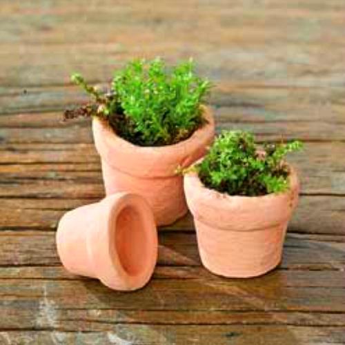 little fairy pots