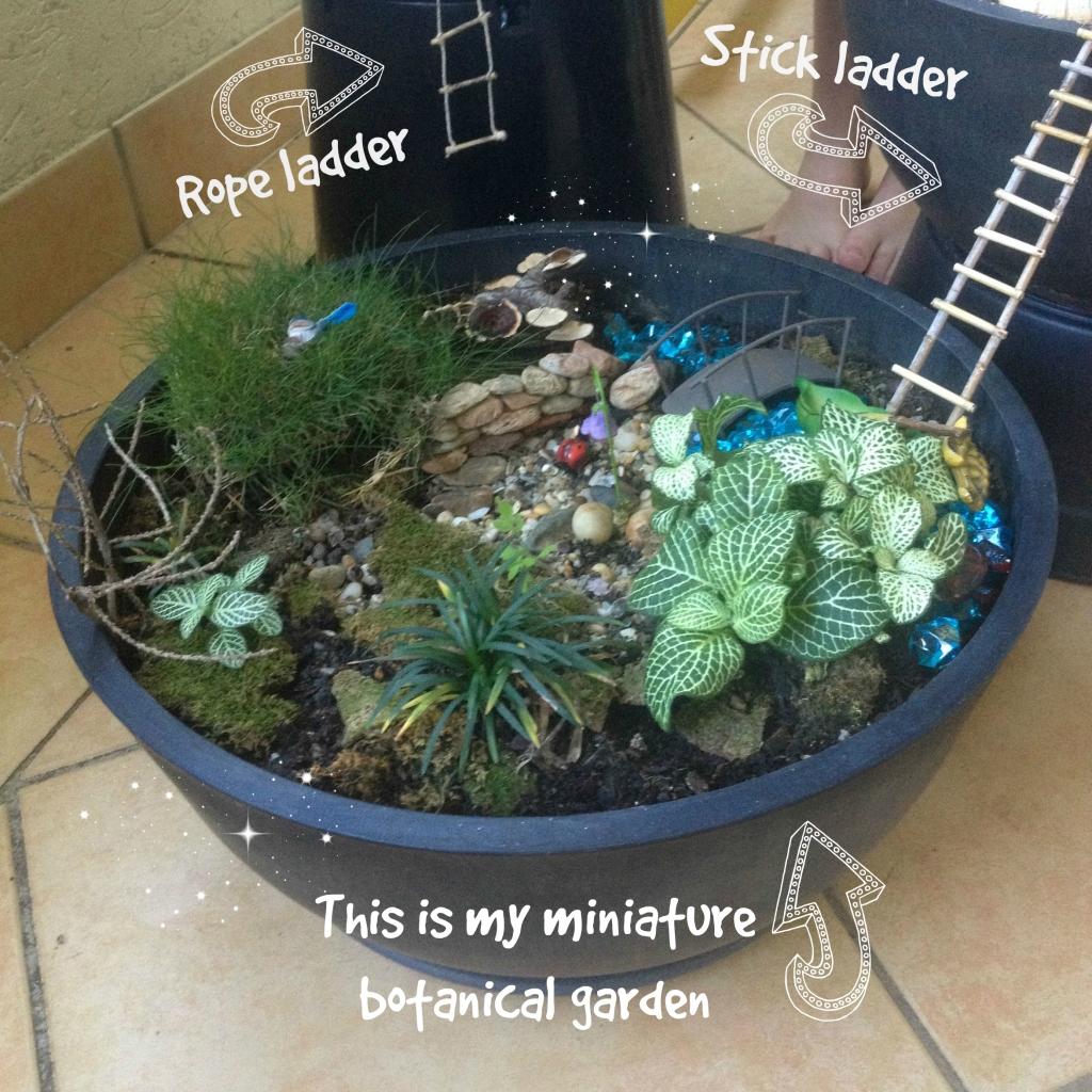 My Fairy Garden in A Pot