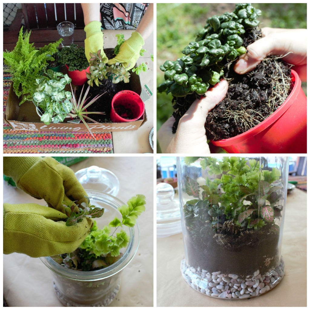 Add plants to your terrarium fairy garden