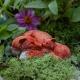 Mama and Baby Fox - Fairy Garden Animals