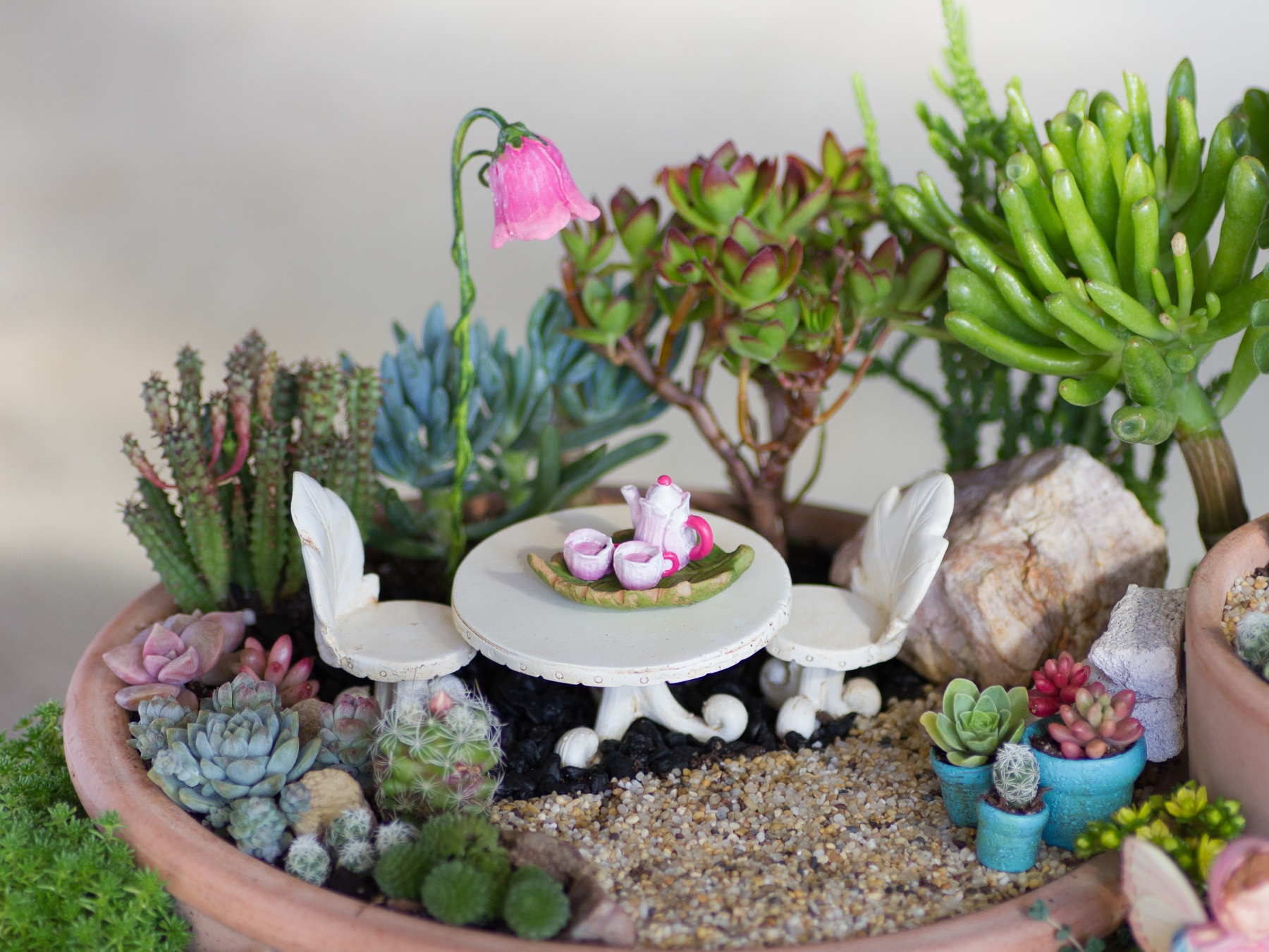 Here Are A Few Close Ups Of Each Sectionu2026moments Captured In My Succulent  Fairy Garden.