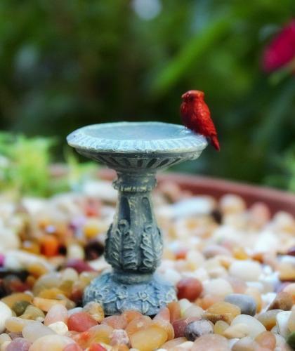 Bird Bathes & Bird Houses